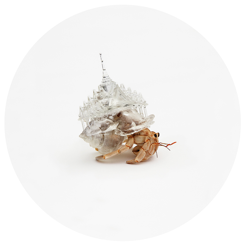 "From the Why Not Hand Over a ""Shelter"" to Hermit Crabs? series by Aki Inomata"